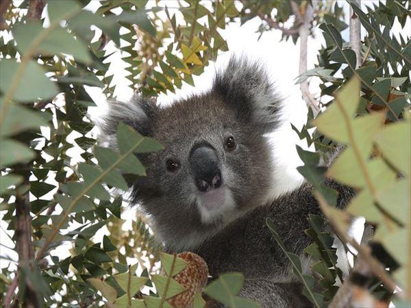 ニュージーランドとオーストラリアの関係